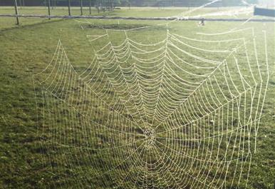 Spiders web